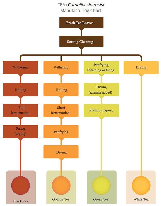 Tea manufacturing chart