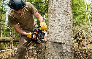 Arboreal Experts | Ballston Lake, NY | Ward Brothers Tree Service | 518-365-9187