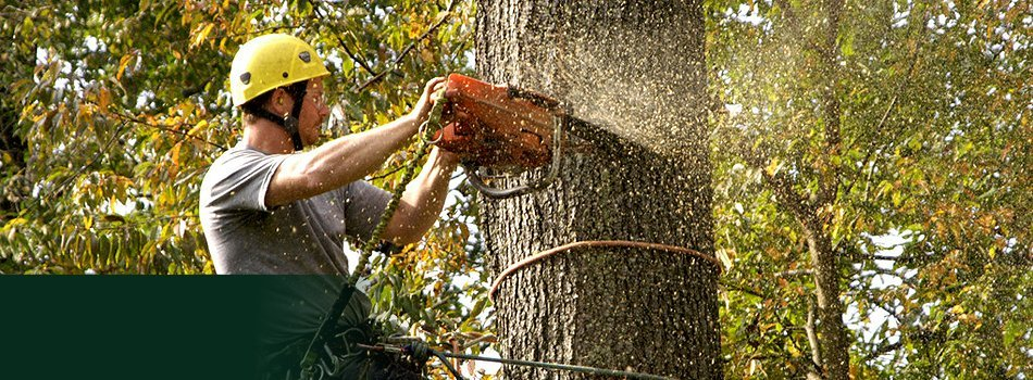 Tree Care | Ballston Lake, NY | Ward Brothers Tree Service | 518-365-9187