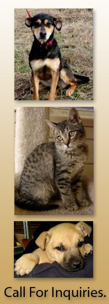 Animal Adoption - West Point, MS - West Point - Clay County Animal Shelter