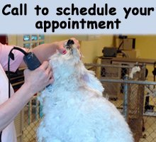 Dog Grooming - Springfield, OR - Precious Pets Grooming - Dog Grooming - Call to schedule your appointment