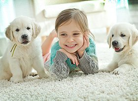 Happy girl and puppies on carpet