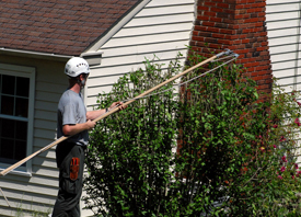 Tree Trimming and Removal - Palm Beach Gardens,  FL - Golden Age Landscaping