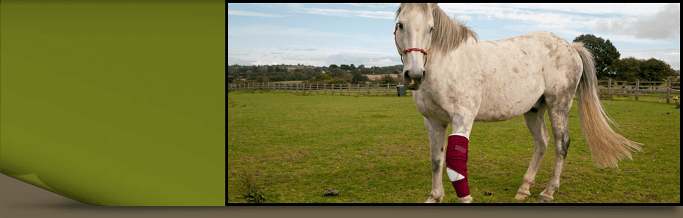 Emergency Veterinarian | Turlock, CA | Taylor Equine Hospital | 209-669-8600