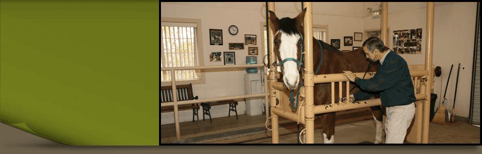Horse veterinarian | Turlock, CA | Taylor Equine Hospital | 209-669-8600