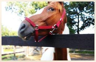Riding Events  | Walden, NY | Saddle Brook Farm Animal Rescue | 845-778-3420