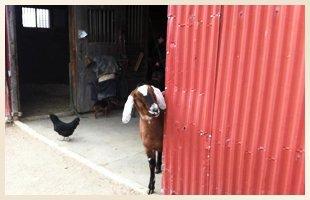 Horse Barn   Walden, NY   Saddle Brook Farm Animal Rescue   845-778-3420