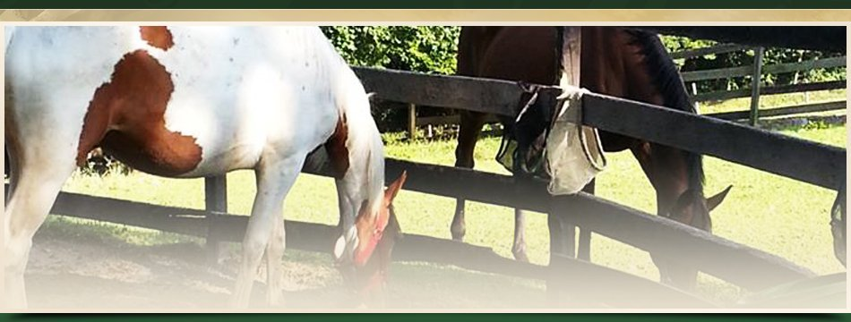 Horse Barn | Walden, NY | Saddle Brook Farm Animal Rescue | 845-778-3420