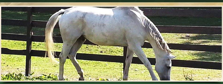 Internships | Walden, NY | Saddle Brook Farm Animal Rescue | 845-778-3420
