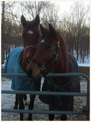 Animal Rescue | Walden, NY | Saddle Brook Farm Animal Rescue | 845-778-3420