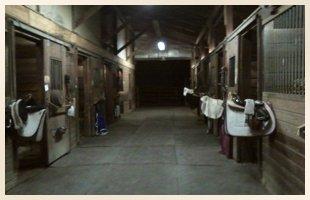 Equestrain Facility | Walden, NY | Saddle Brook Farm Animal Rescue | 845-778-3420