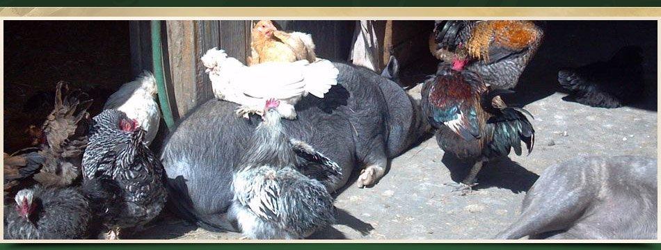 501C3 | Walden, NY | Saddle Brook Farm Animal Rescue | 845-778-3420