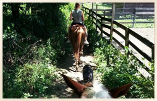 Equestrain Facility | Walden, NY | Saddle Brook Farm Animal Rescue | 845-778-3420