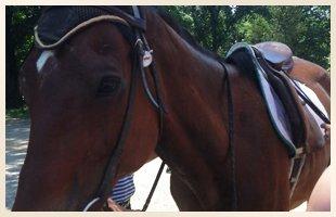 Horse Camp   Walden, NY   Saddle Brook Farm Animal Rescue   845-778-3420