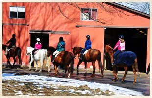 Horse Camp | Walden, NY | Saddle Brook Farm Animal Rescue | 845-778-3420