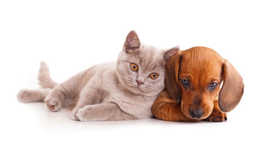 All Paws Grooming Pet Grooming Middletown Ct