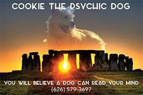 Cookie the Psychic Dog
