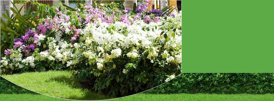 Yard work | Santa Maria, CA | Knudsen Gardening & Landscaping Inc. | 805-354-5925