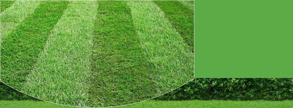 Lawn maintenance | Santa Maria, CA | Knudsen Gardening & Landscaping Inc. | 805-354-5925