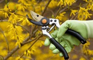 Lawn care   Santa Maria, CA   Knudsen Gardening & Landscaping Inc.   805-354-5925