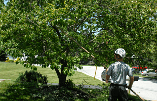 Walkways | Loveland, CO | Rocky Mountain Tree Service | 970-635-9040