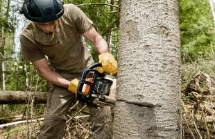 Tree maintenance | Loveland, CO | Rocky Mountain Tree Service | 970-635-9040