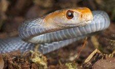 Snake in wild