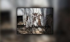 Picture of Termite Infestation