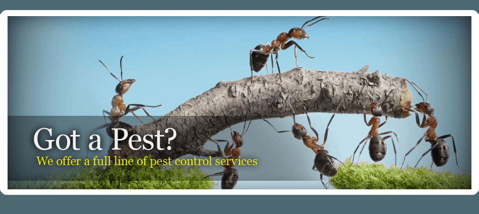 Flea Treatments | Hot Springs, AR | Advanced Pest Control | 501-623-5888