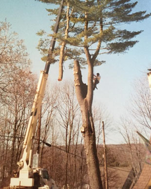 Stump grinding | Monroe, NY | Acorn Tree & Crane Service | 845- 987-4610