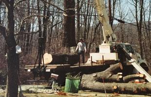 Cabling | Monroe, NY | Acorn Tree & Crane Service | 845- 987-4610