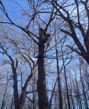 Storm Damage  clean up | Monroe, NY | Acorn Tree & Crane Service | 845- 987-4610