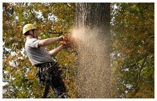 Site Work | Franklinville, NJ | D B Paulson Tree Service Inc | 866-664-2034