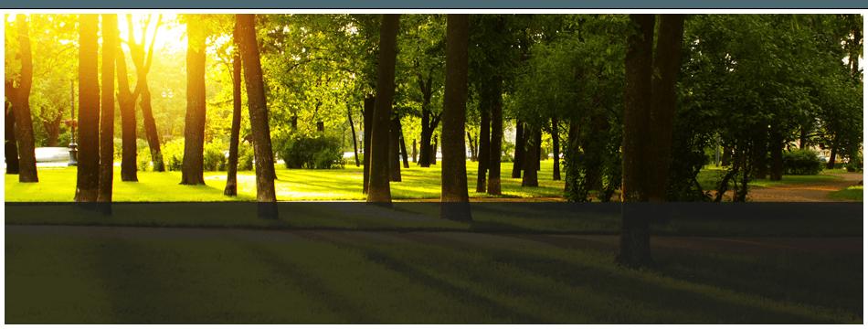 Stump Grinding | Franklinville, NJ | D B Paulson Tree Service Inc | 866-664-2034