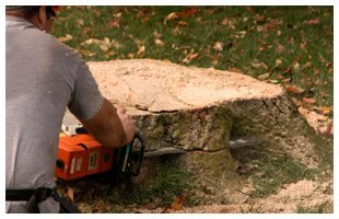 Topping   Franklinville, NJ   D B Paulson Tree Service Inc   866-664-2034