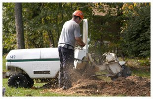 Bucket Truck Service | Franklinville, NJ | D B Paulson Tree Service Inc | 866-664-2034