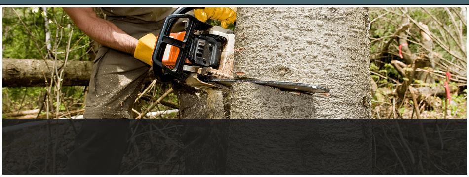 Landscape Maintenance | Franklinville, NJ | D B Paulson Tree Service Inc | 866-664-2034
