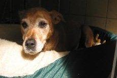 Dog Obedience Classes - Durham, CT - Larkin's Run