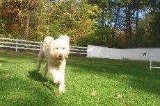 Dog Boarding - Durham, CT - Larkin's Run