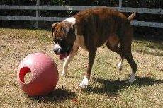 Certified Dog Trainers - Durham, CT - Larkin's Run