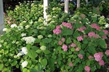 Flowers | Ann Arbor, MI | Abbott's Landscape Nursery | 734-665-8733 (TREE)