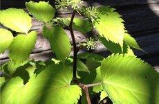 Garden art | Ann Arbor, MI | Abbott's Landscape Nursery | 734-665-8733 (TREE)