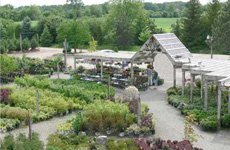 Nursery | Ann Arbor, MI | Abbott's Landscape Nursery | 734-665-8733 (TREE)