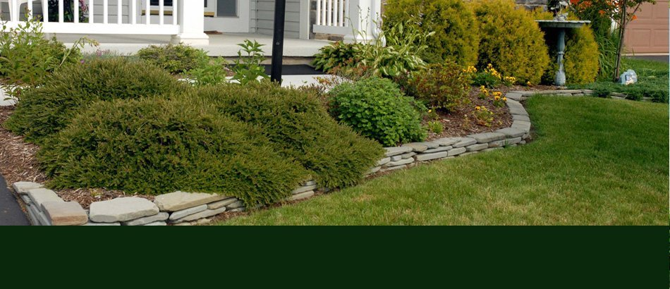 100% one year purchase price warranty on all trees and srhubs | Ann Arbor, MI | Abbott's Landscape Nursery | 734-665-8733 (TREE)