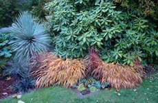 Walk patio installations   Ann Arbor, MI   Abbott's Landscape Nursery   734-665-8733 (TREE)