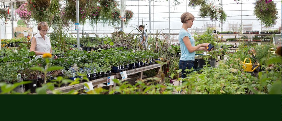 Trees | Ann Arbor, MI | Abbott's Landscape Nursery | 734-665-8733 (TREE)