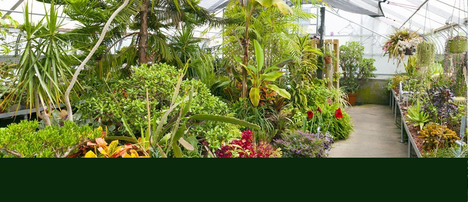 Plant care products | Ann Arbor, MI | Abbott's Landscape Nursery | 734-665-8733 (TREE)