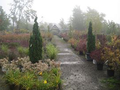 Landscaping Ann Arbor Mi Abbott S Landscape Nursery