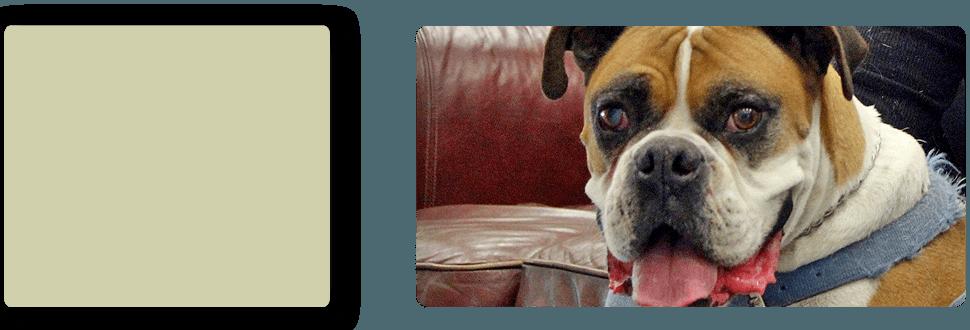 Dog Grooming | Turlock, CA | Taylor ER Veterinary Emergency Hospital | 209-669-8600