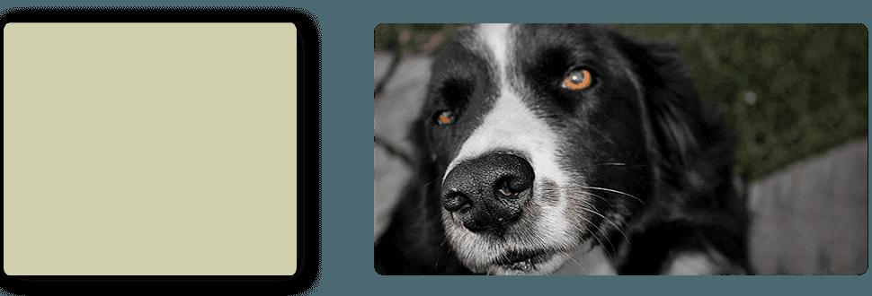 Farm Doctor | Turlock, CA | Taylor ER Veterinary Emergency Hospital | 209-669-8600